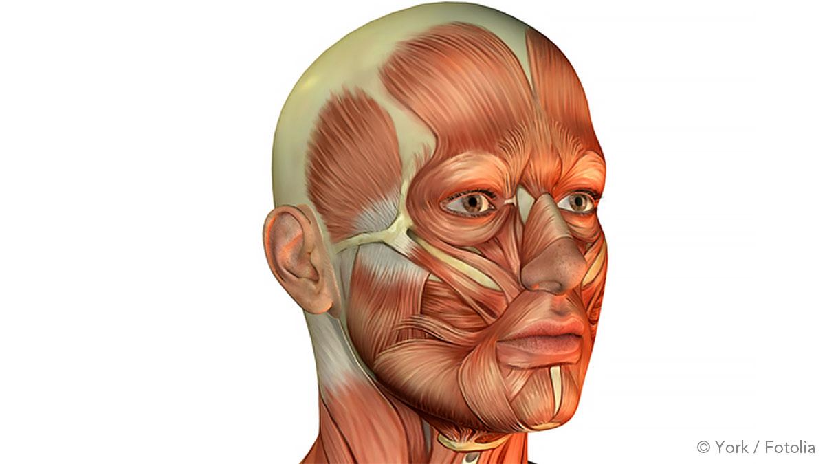 Facial muscle training
